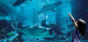 Atlantis Undercroft