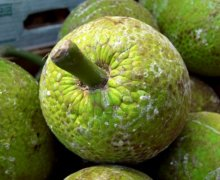 The Health Benefits of Breadfruit