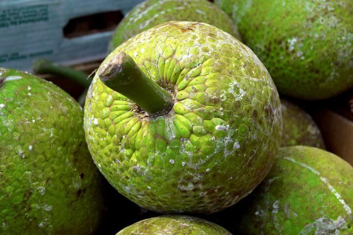 Health Benefits of Breadfruit